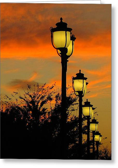 Cranes Roost Lights Greeting Card