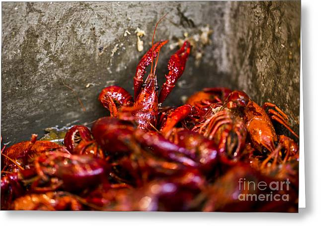 Crawdaddy Greeting Card by Leslie Leda