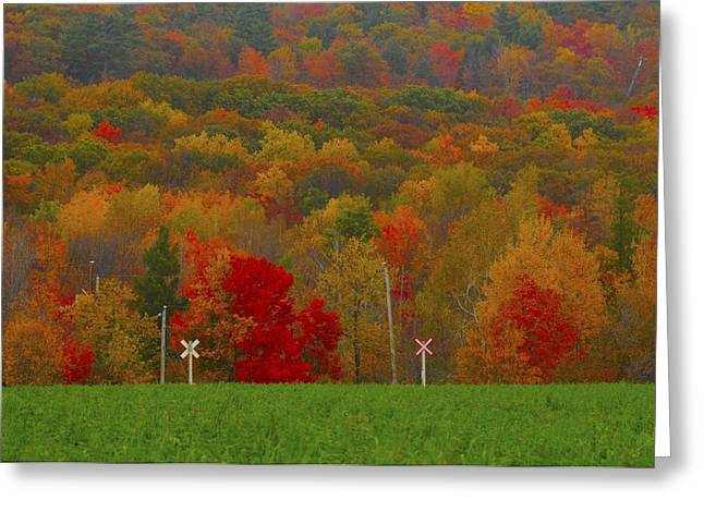 Crazy Fall Colors Greeting Card by Rawimage Photography