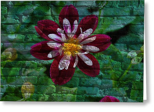 Crazy Flower Over Brick Greeting Card by Eric Liller