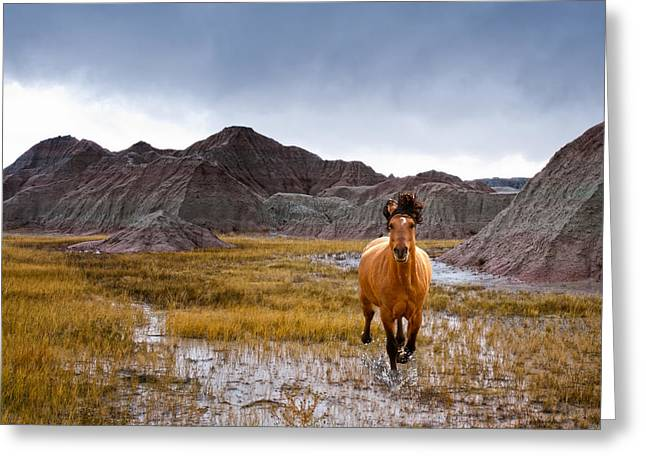 Crazy Horse Greeting Card by Ron  McGinnis
