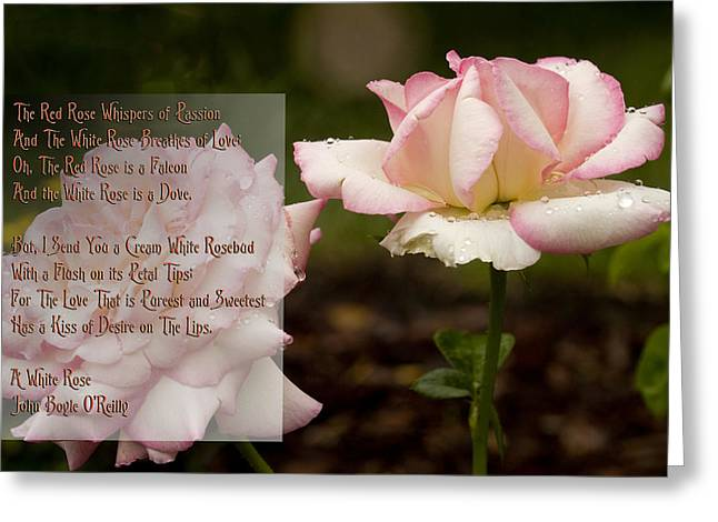 Cream White Rosebud With Poem Greeting Card by Barbara Middleton