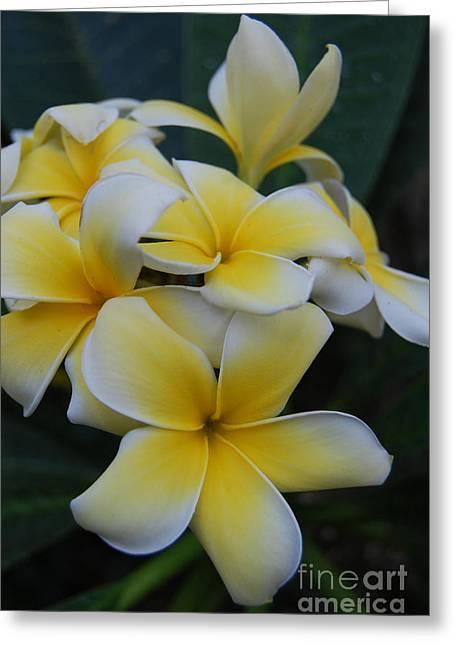 Creamy Yellow Flowers Greeting Card