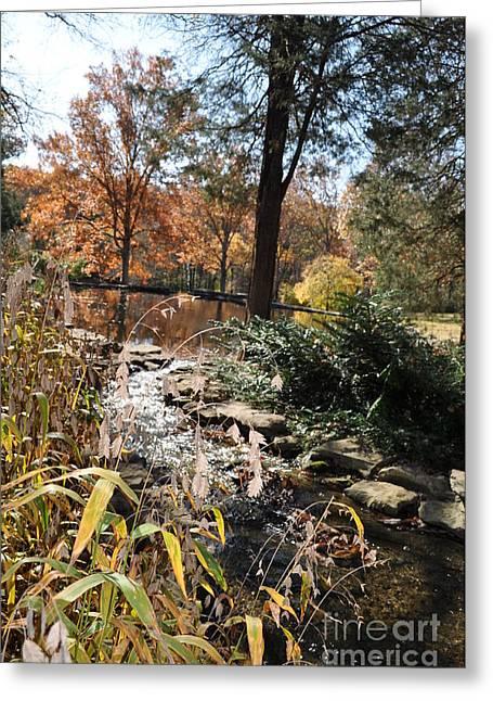 Creek Greeting Card by Denise Ellis