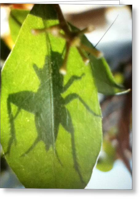 Cricket Shadow Greeting Card
