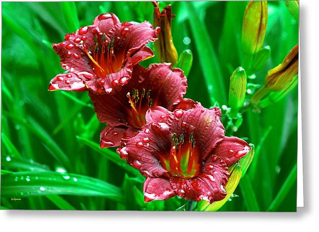 Crimson Lilies In April Shower Greeting Card