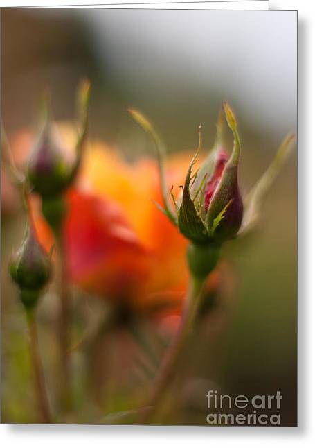 Crisp New Buds Greeting Card by Mike Reid