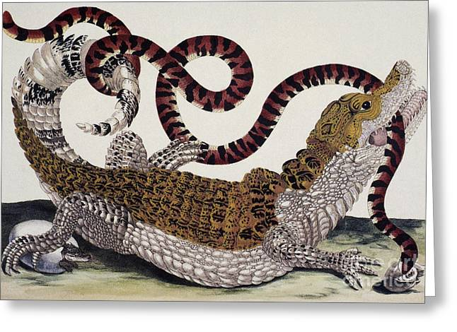 Crocodile & Snake Greeting Card