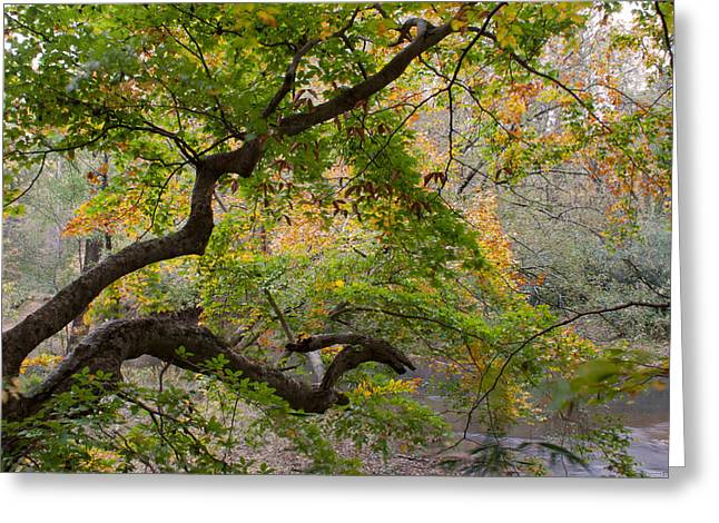Crooked Limb Greeting Card by David Troxel
