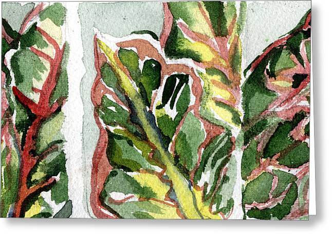 Crotons In Red And Green Greeting Card by Mindy Newman