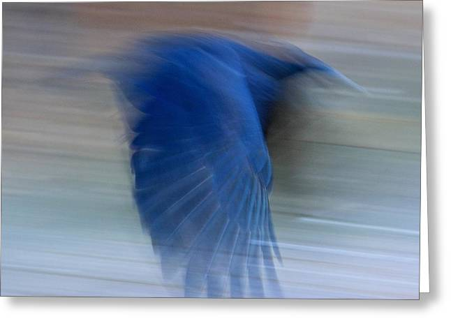Crow Motion Greeting Card by Scott Holmes