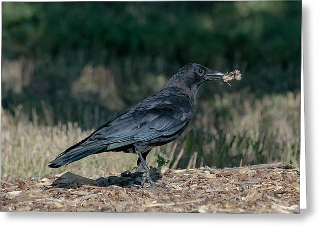 Crow Greeting Card by Stephen  Johnson