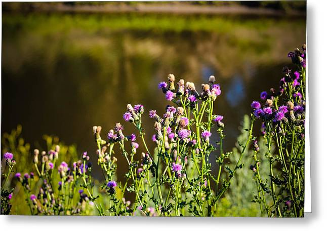 Crowd Of Purple Thistles Greeting Card