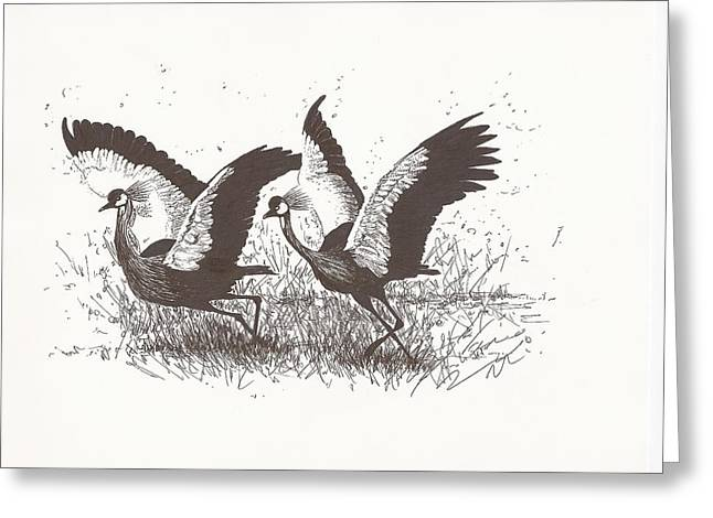 Crowned Cranes Ready For Take-off Greeting Card by Pat Barker