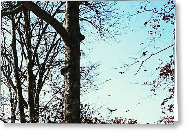 Greeting Card featuring the photograph Crows In For Landing by Pamela Hyde Wilson