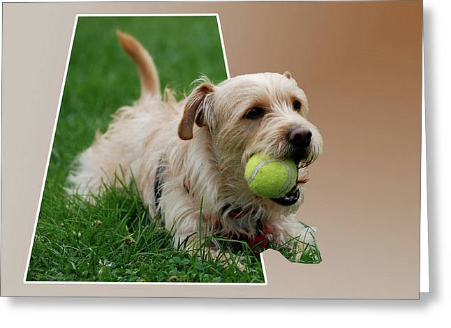 Greeting Card featuring the photograph Cruz My Ball by Thomas Woolworth