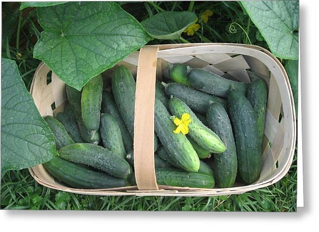 Cucumbers In Garden Basket Greeting Card