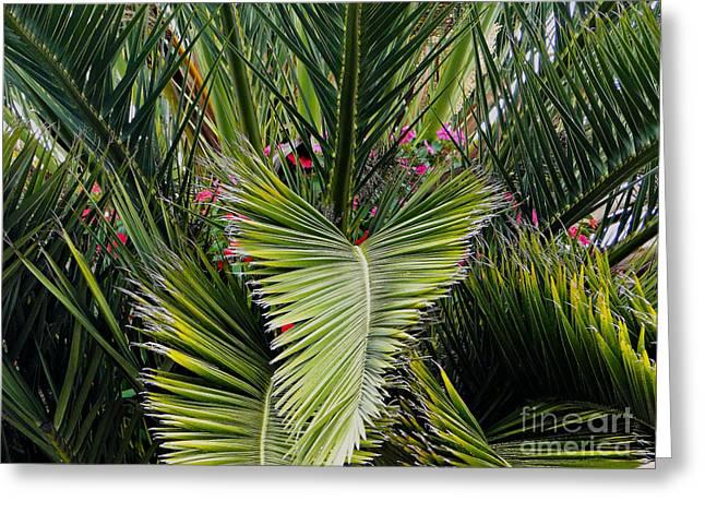 Cuenca Pretty Palm Greeting Card by Al Bourassa