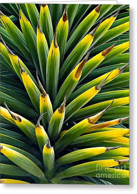Cuenca Tropical Tree Greeting Card by Al Bourassa