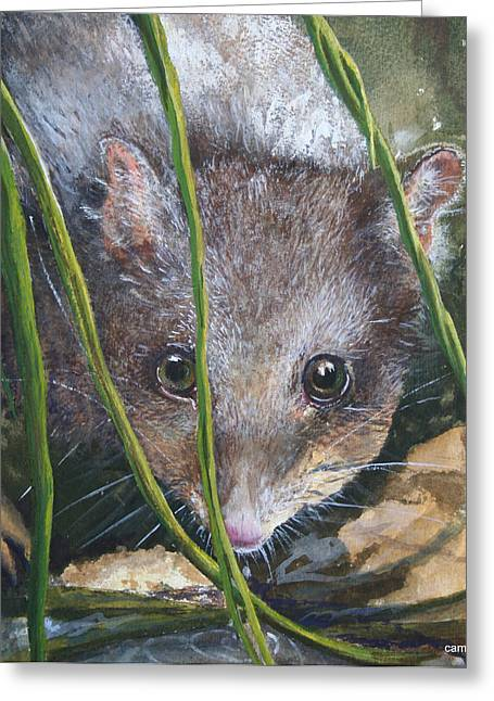 Curious - Northern Quoll Greeting Card by Jan Lowe