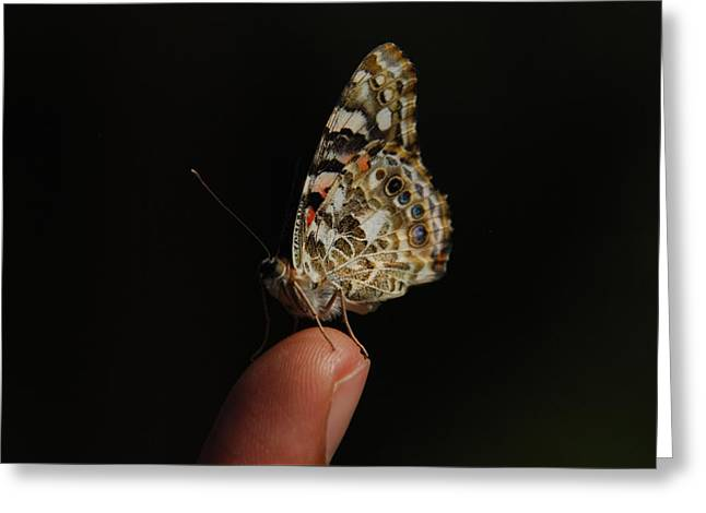 Greeting Card featuring the photograph Curious Butterfly by Tam Ryan