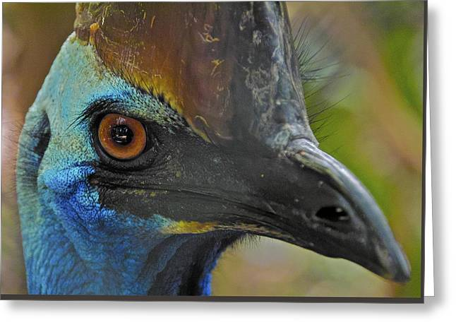 Curious Cassowary Greeting Card