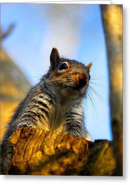 Greeting Card featuring the photograph Curious Fellow by John Chivers