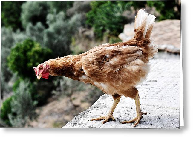 Curious Hen Greeting Card