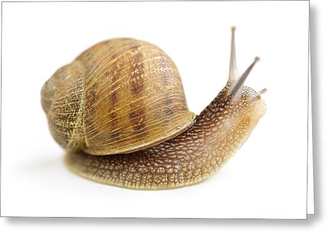 Curious Snail Greeting Card