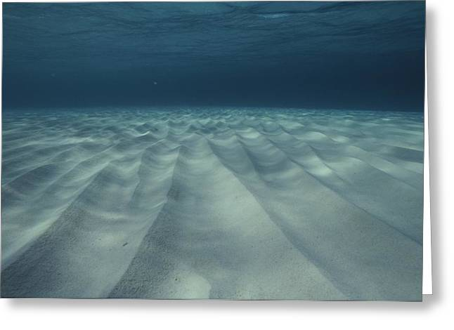 Current-sculpted Ripples In The Sandy Greeting Card by Bill Curtsinger