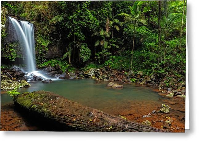 Curtis Falls - Mt Tamborine Greeting Card