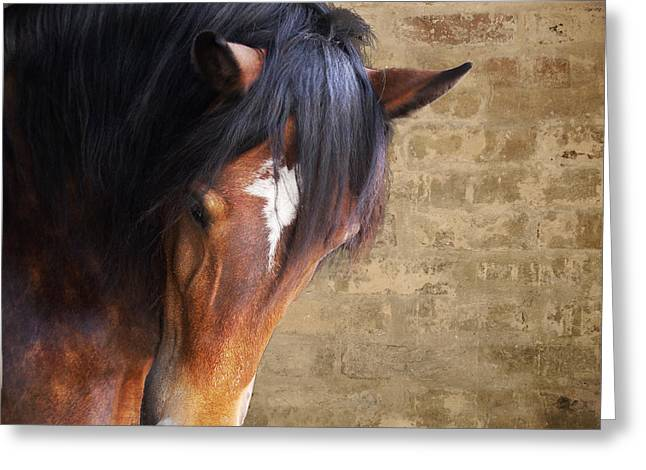 Cute Bay Horse With Long Mane Greeting Card by Ethiriel  Photography