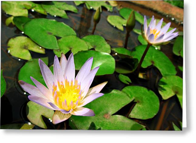 Cute Blue Lotus Greeting Card by Dumindu Shanaka