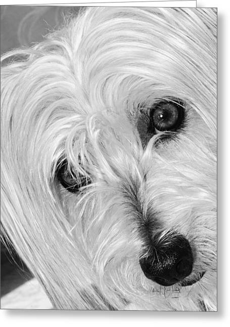 Cute Dog Greeting Card by Imagevixen Photography