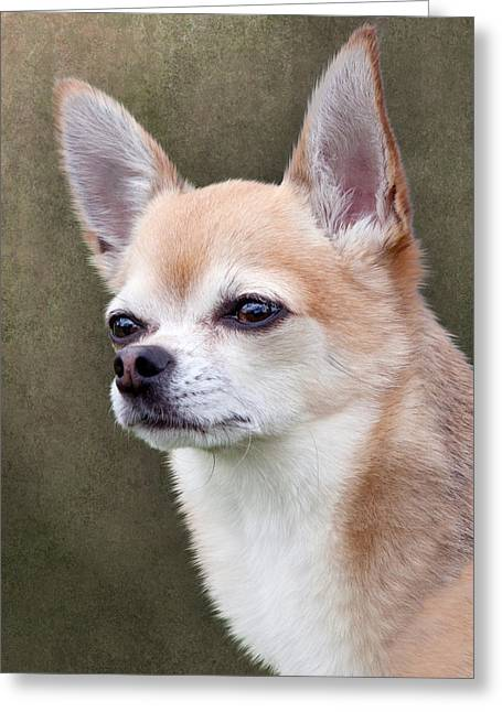 Greeting Card featuring the photograph Cute Fawn Chihuahua Dog by Ethiriel  Photography