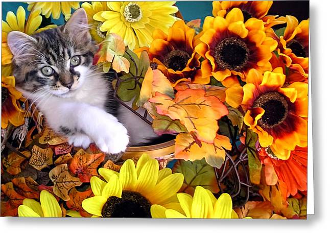 Cute Kitty Cat Kitten Lounging In A Flower Basket With Paw Outstretched - Fall Season Greeting Card by Chantal PhotoPix