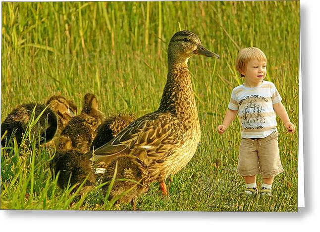 Cute Tiny Boy Playing With Ducks Greeting Card