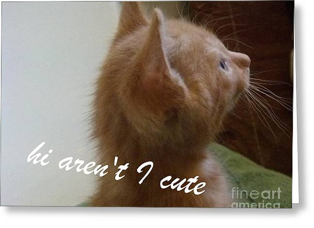 Greeting Card featuring the photograph Cutest Kitty Ever by Garnett  Jaeger