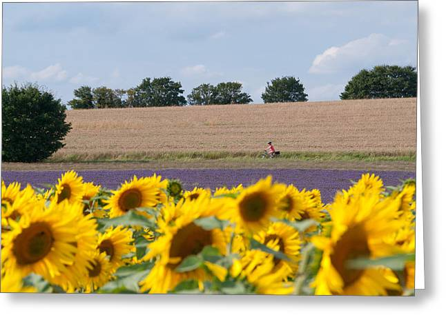 Cycling Through Fields Greeting Card by Rosie Herbert