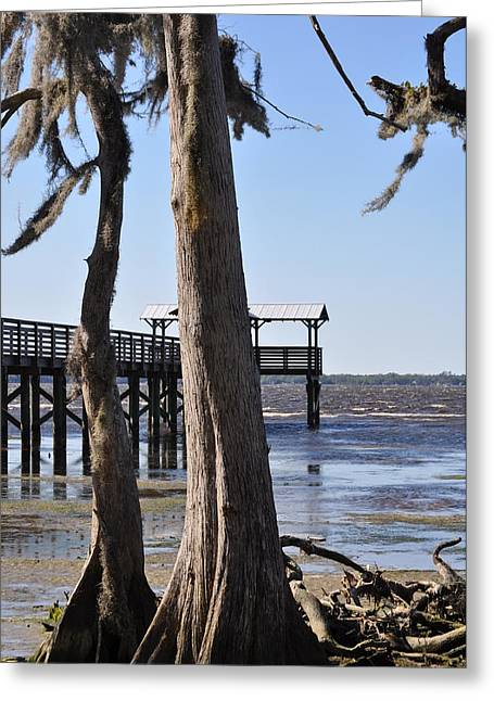 Cypress And Dock At Low Tide Greeting Card by Tiffney Heaning