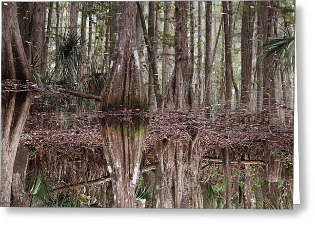 Cypress Hammock Greeting Card by Joseph G Holland