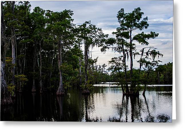 Greeting Card featuring the photograph Cypress Swamp In Louisiana by Ester  Rogers