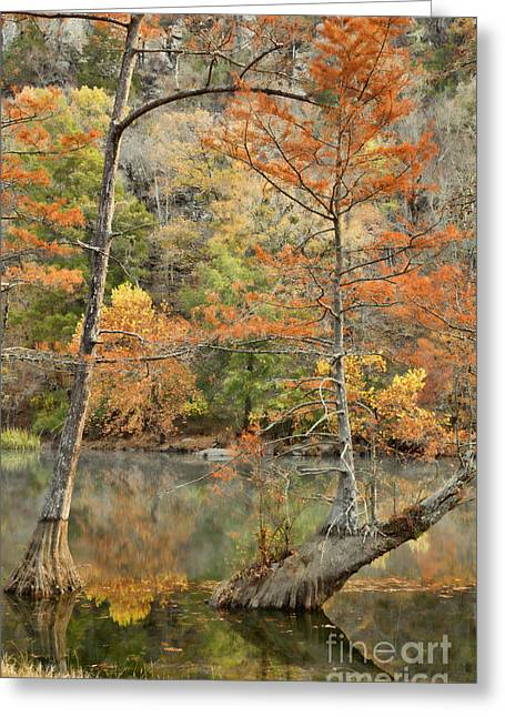 Cypress Trees In The Morning Light Greeting Card by Iris Greenwell