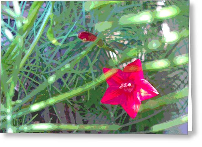 Cypress Vine With Foliage Greeting Card by Padre Art
