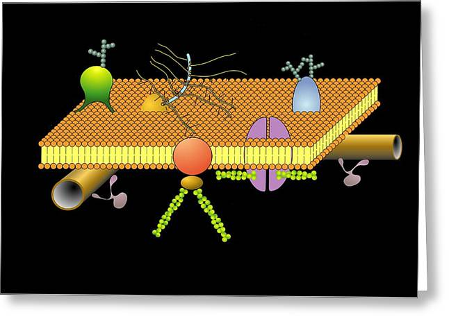 Cytoskeleton And Membrane, Artwork Greeting Card by Francis Leroy, Biocosmos