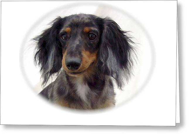 Dachshund 07 Greeting Card by Larry Matthews