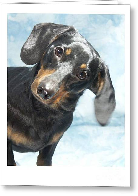 Dachshund 441 Greeting Card by Larry Matthews
