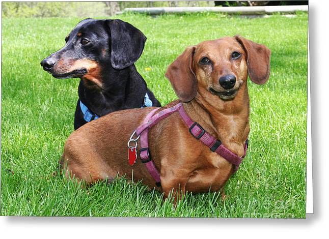 Dachshund Abby And Hoover Greeting Card