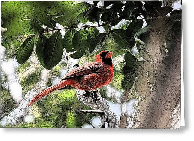 Greeting Card featuring the photograph Daddy Cardinal by Donna G Smith