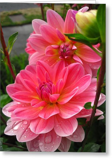 Dahlia Dew Greeting Card